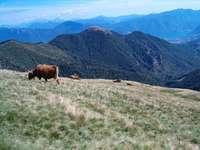 1. August-Brunch: Alta Magliasina Allevamento