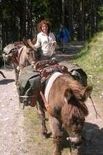 Ferme à Cadichon: Randonnées avec des ânes