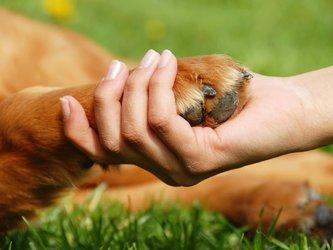 Freundschaft mit Deinem Tier - Tierkommunikation Karin Grämiger