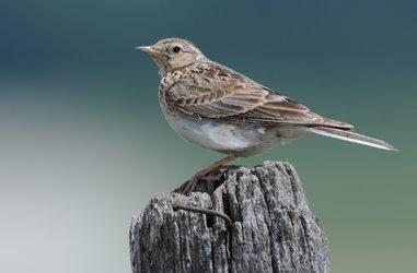 Oiseau (©Parc naturel régional Gruyère Pays-d'Enhaut)