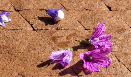 «Keiner zu klein, ein Botaniker zu sein!» Kinderworkshop