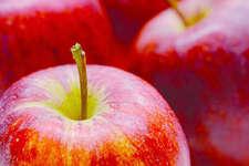Gala – der beliebteste Apfel der Schweizer. Bild: Silvan Thüring