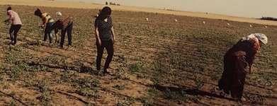 Rojava Revolution - Ausstellung
