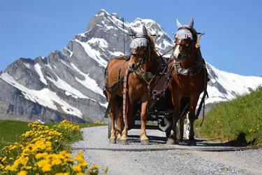 Frühlings-Kutschenfahrten in Braunwald