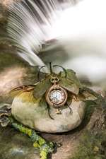 Insect O'clock (Joanne Besse)