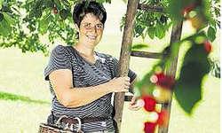 Arbeitsalltag einer Bäuerin: Die vielseitige Mutter und Bäuerin Priska Abegg- Sigrist aus Steinerberg liess sich Anfang Juli auch beim Chriesnen filmen. (Bild Merly Knörle, SF)