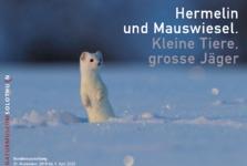 zur Zeit geschlossen: Ausstellung Hermelin und Mauswiesel