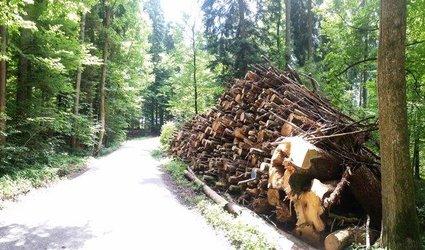 Waldtag: Mein Wald - Dein Wald