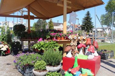 Frühlingsmarkt - Pflanzensetzlinge
