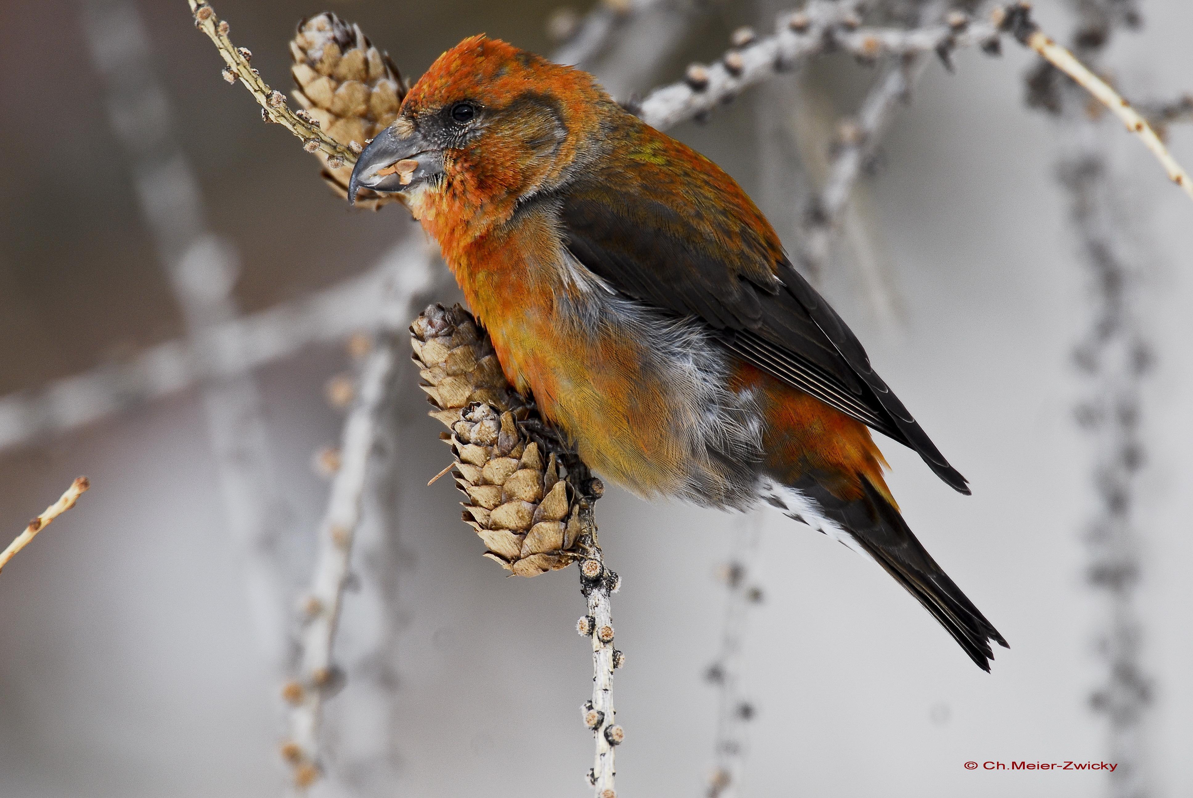 Vogelkunde-Kurs im Parc Ela