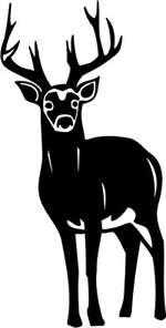 Hirsch-Safari im Glarnerland