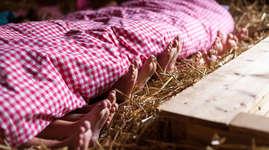 Appenzeller Erlebnisbauernhof - Lillybeizli: Schlafen im Stroh