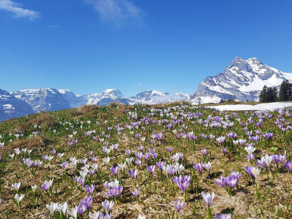 Frühling in Braunwald