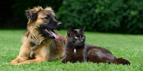 Grundkurs Tierkommunikation: Lerne deinen Tierfreund besser verstehen - 1