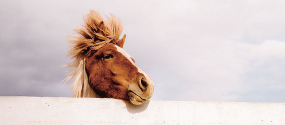 Ausbildung: Fasziale Osteopathie für Pferde und Hunde - 1