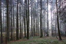 Workshop im Wald: Vor lauter Bäumen den Wald sehen