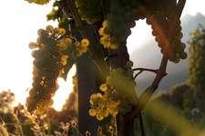 Offene Türen - Weindegustation