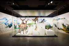 Schauplatz Natur - Vögel, Säugetiere und Mineralien der Schweiz