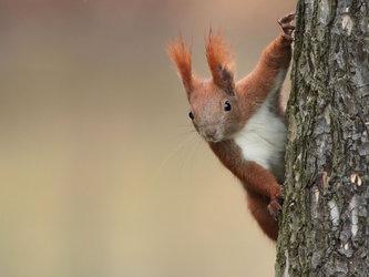 Freches Eichhörnchen. Bild: Jörg Uhlemann