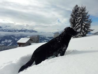 Chalet dog Hanibal is watching out