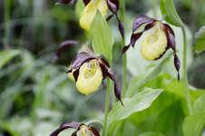 Artenschutz zwischen Himmel und Erde – Orchideen