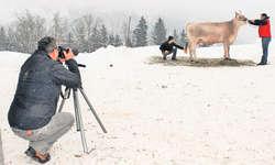Kuhdame Gabi steht für das Foto und den Fotografen Konrad Lustenberger bereit. Bild Reto Betschart