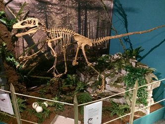Impression der Sauropoden Ausstellung