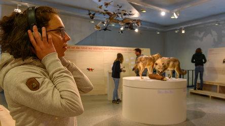Der Wolf ist da. Ein Thema –zwei Ausstellungen - 1