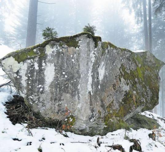 Der Dreifingerstein im Wald am Höhronen. (Bild Stefan Kaiser)