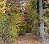 1. Atem-Meditation im Eggerwald