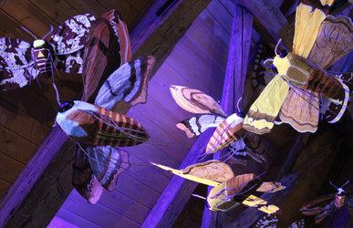 Expo, Nuit blanche chez les insectes (Pro Natura, Centre de Champ-Pittet)