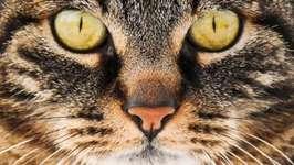 Naturmuseum Thurgau, Die Hauskatze - das beliebeste Haustier in der Schweiz