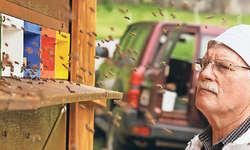 Der Arther Imker Josef Suter, ein pensionierter Metzger, lebt sein Leben im Rhythmus der Bienen. Gelassenheit und Geduld ist hierbei sehr wichtig. Bild Brian Gottschalk