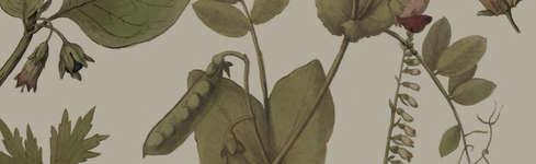 """Exposition : """"Quelles belles plantes"""""""