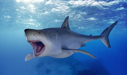 Haie der Urmeere