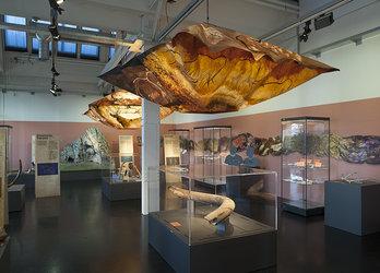Blick in die Sonderausstellung. Foto: Museum für Urgeschichte(n) Zug, Res Eichenberger.