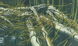 Klaus Mettler stellt den Urwald im Bödmerenwald in den Mittelpunkt seines Werks.