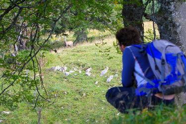 Wildlife watching, (Jura bernois Tourisme)