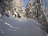 Randonner sur les traces de l'hiver