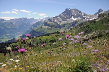 Ortstock und Sommerblumen