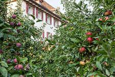 Klostergarten im Herbst