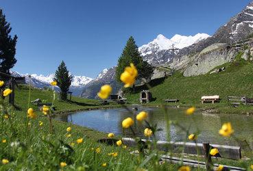 Faszination Natur – Alpenblumenweg - 1