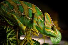 Reptiles EXPO
