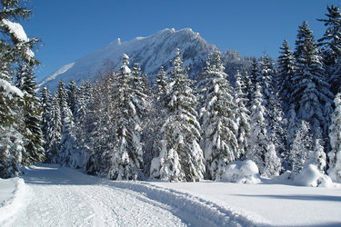 Winterlandschaft im Arvenbüel
