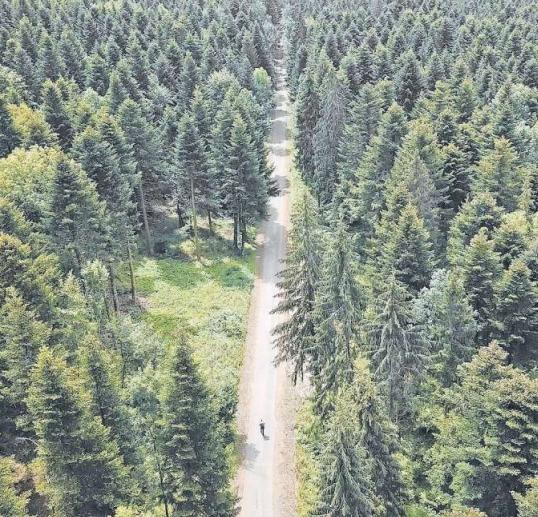 Diese Szene aus dem Film zeigt den Pilger auf seinem Weg durch Frankreichs Wälder. (Bild: PD)