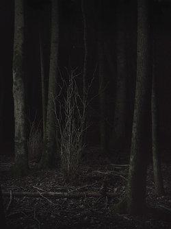"""Mathieu Rod """"forest"""" (Mathieu_Rod)"""