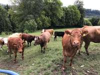 Fribis Farm