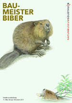 Postkarte zur Sonderausstellung «Baumeister Biber». Naturmuseum Solothurn
