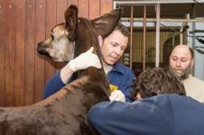 Der Zolli Tierarzt Christian Wenker