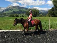 Ponyreiten in Obersaxen Mundaun ABGESAGT
